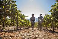 Two men carrying buckets in vineyard - ZEF009357