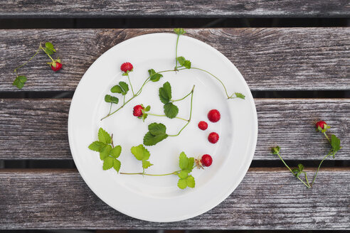 Wild strawberries, leaves and tendrils on plate - GWF004861