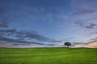 Germany, Bavaria, green meadow and single tree - YRF000122