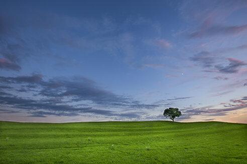 Germany, Bavaria, green meadow and single tree - YRF000122