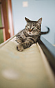 Portrait of tabby cat at home - RAEF001315