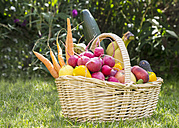 Basket with fruits and vegetables - SARF002835