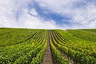 Germany, Bavaria, Upper Franconia, vine yard Escherndorfer Lump near Vollkach - SIEF007076