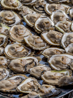 Croatia, Mali Ston, oyster culture, fresh oysters - EJWF000786