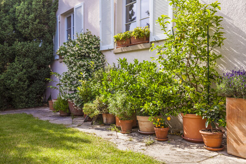 Potted plants in front of house - WDF003705