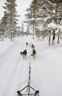 Sweden, near Village Idre, husky sledge and dogs in winter - TKF000445