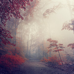Forest in autumn, path and early-morning haze - DWIF000764