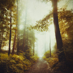 Deciduous forest in spring, forest path - DWIF000767