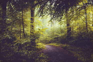 Deciduous forest in summer, forest path and early-morning haze - DWIF000770