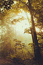 Deciduous forest in autumn, early-morning haze and flying birds - DWIF000773