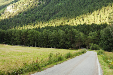 Empty country road at the edge of  pine forest - VABF000752