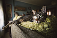 Tabby cat relaxing on couch - RAEF001409