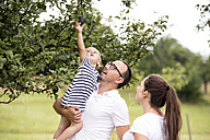 Little girl reaching for plum in tree from father's arms - HAPF000716