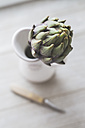 Artichoke in jug, kitchen knife - ASCF000633