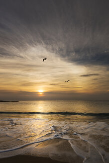Australia, Coogee, Coogee Beach with two seagulls and evening sun - GOAF000003
