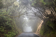 Spain, Tenerifa, empty road, foggy - SIPF000783