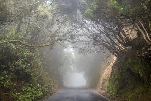 Spain, Tenerifa, empty road, foggy - SIPF000783