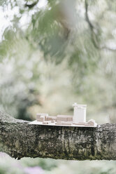 Architectural model on a branch - KNSF000264