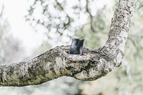 Cell phone on a branch - KNSF000366