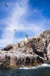 UK, Scotland, East Lothian, lighthouse on Bass Rock and a colony of Northern Gannets - SMAF000532