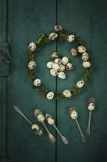Box tree wreath, quail eggs and silver tea spoons on green wood - ASF005993