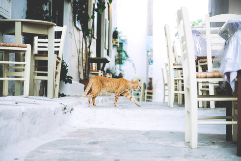 Greek, Cyclades, cat walking between the tables of a pavement cafe - GEMF000988