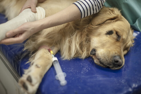 Dog in surgery - ZEF009816
