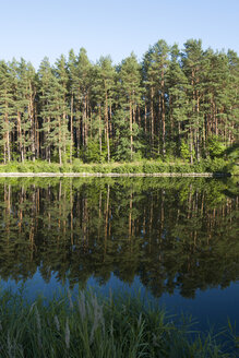 Germany, Brandenburg, Canal and water reflection of trees - JMF000383