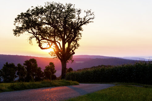 Germany, Silhouette of tree at dawn - MIDF000792