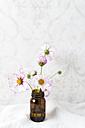 Cosmea, Cosmos bipinnatus, in glass - MYF001763