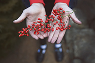 Wild berries in hands - RTBF000319