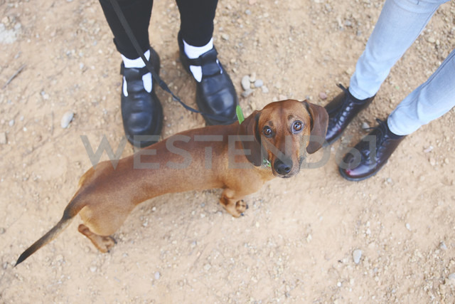 Dachshund with owners outdoors - RTBF000325