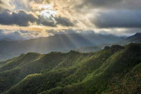 Italy, Emilia-Romagna, Foreste Casentinesi National Park - LOMF000378
