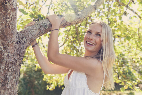 Happy young blond woman at apple tree - MFF003099