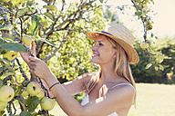 Young woman with straw hat picking apples from tree - MFF003354