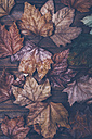 Autumn leaves on wood - RTBF000334