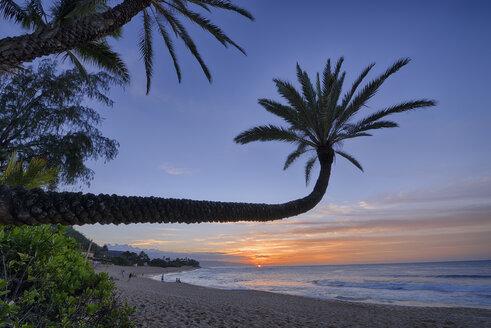 USA, Hawaii, Oahu, palm trees on the beach by sunset - RUEF001761