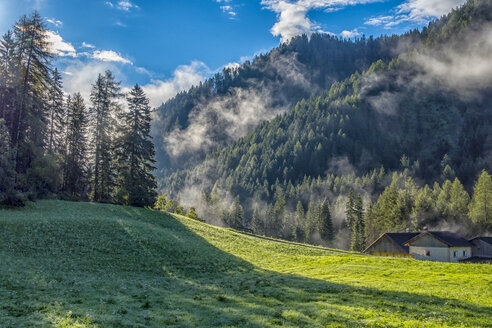 Italy, South Tyrol, Dolomites, Fog in the forest in the morning - LOMF00383