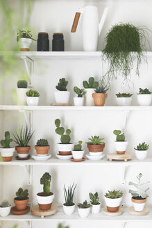Collection of cacti and succulents - RTBF00350