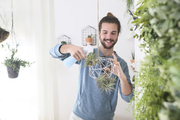 Young man watering air plants in geometric pendant - RTBF00365