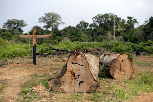 Brazil, Para, Trairao, illegally lumbered trees of Amazon rainforest - FLKF00704