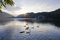 Germany, Bavaria, East Allgaeu, Lake Alpsee near Fuessen with swans at sunset - WGF00959