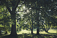 Trees in a public garden at late summer - ASCF00643