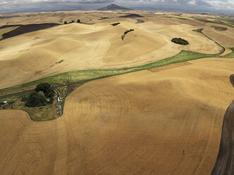 USA, Washington State, Palouse hills, wheat fields during harvesttime - BCDF00024