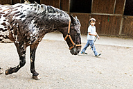 Little boy leading horse - VABF00801