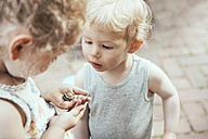 Little boy and girl looking at a snail in hand - MFF03373