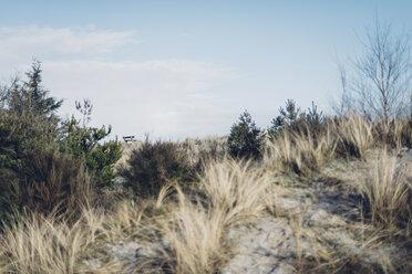 Denmark, Hals, dunes at the Baltic Sea - MJF02023