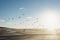 Denmark, Blokhus, boy chasing flock of seagulls on the beach - MJF02077