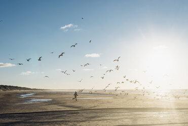 Denmark, Blokhus, boy chasing flock of seagulls on the beach - MJF02077