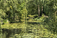 Germany, Moelln, spa park with lily pond - PCF00285